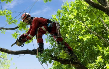find trusted rated Dorset tree surgeons