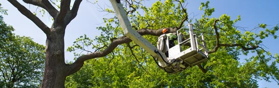 Dorset tree surgery services