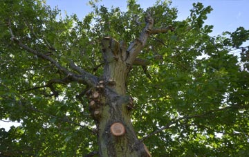 what is Dorset tree surgery?